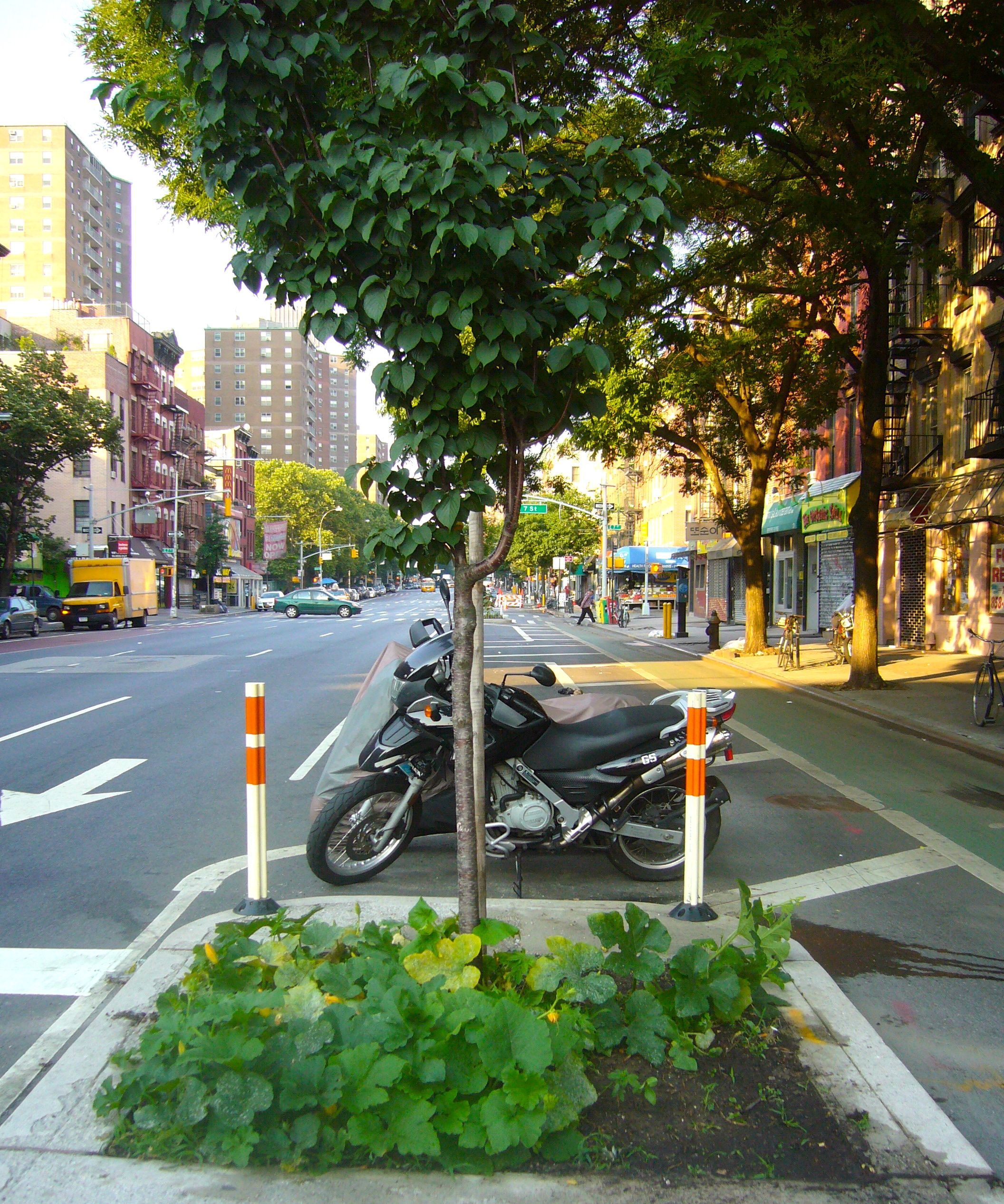 City plants garden correspondent for Garden city trees